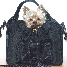 In-Dog-Neeto Bag & Back-pak